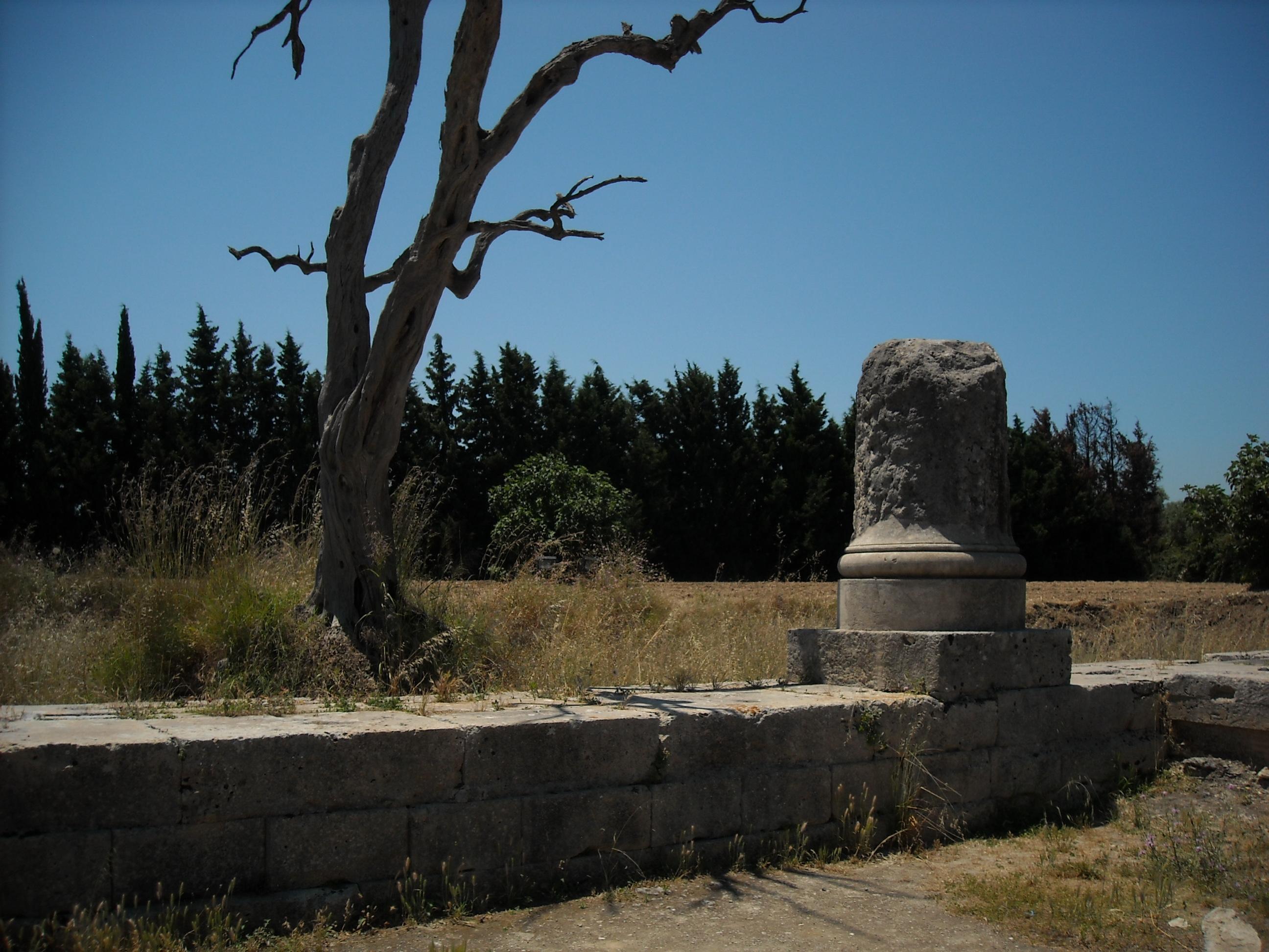 albero e colonna